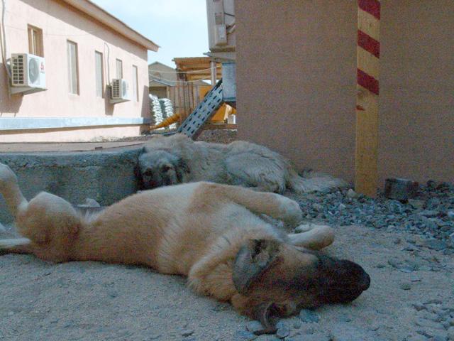 Afgańskie upały wymuszają wręcz odpoczynk.../fot. Marcin Ogdowski