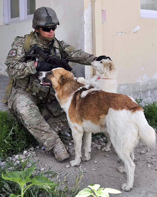 Żołnierz też człowiek, a psy wszędzie takie same - lgną do ludzi/fot. Dariusz Lewtak